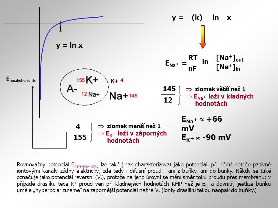 ENa+  +66 mV EK+  -90 mV 1 y = (k) ln x y = ln x ENa+ = [Na+]out